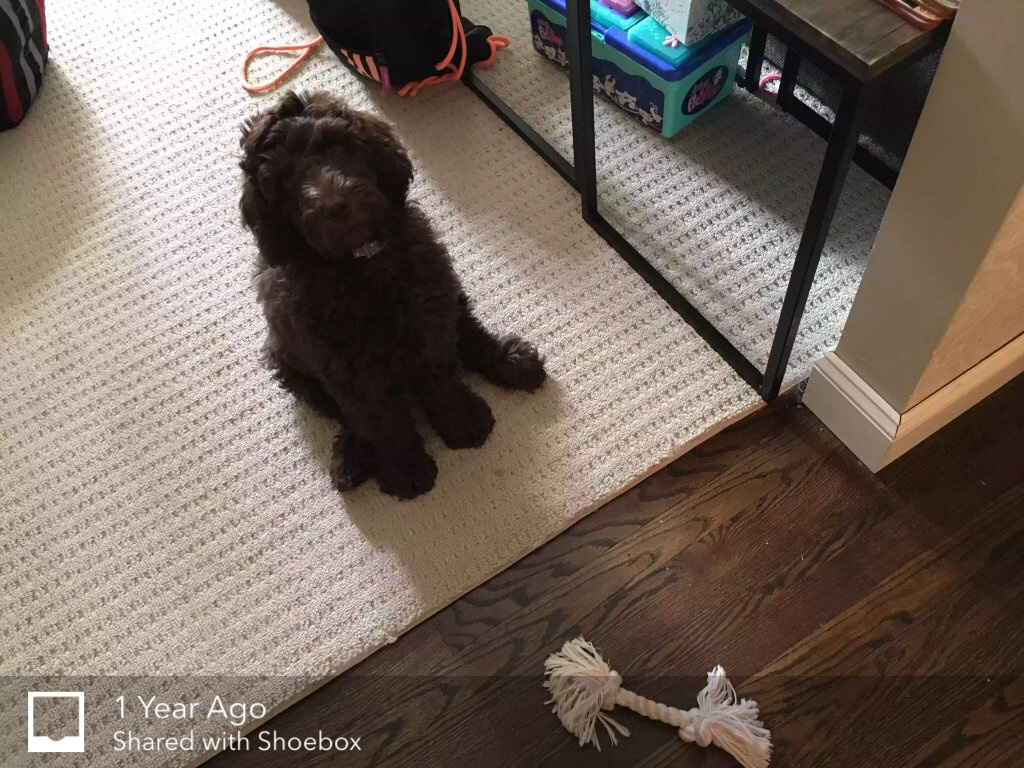 pup on the floor